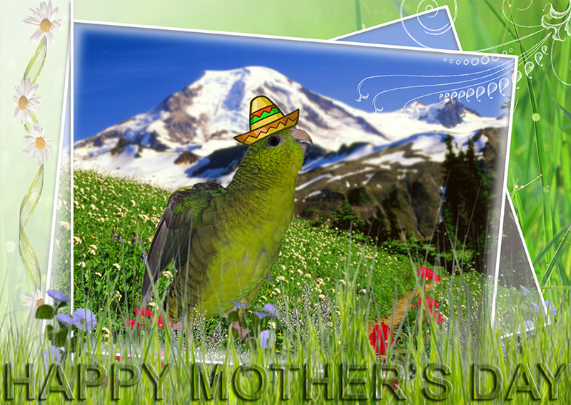 Happy Mother's Day from Pesto the Parakeet and the 2015 PhotoChallenge Team